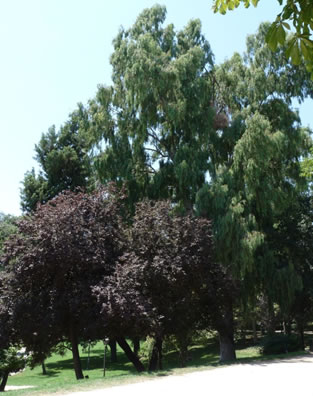 El Jardín de las Vivaces